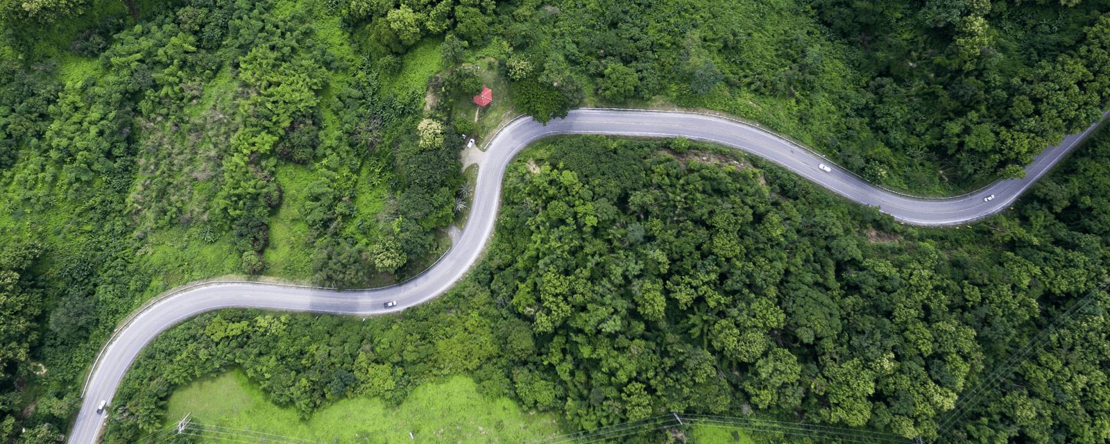 Ecology & Tree Surveys