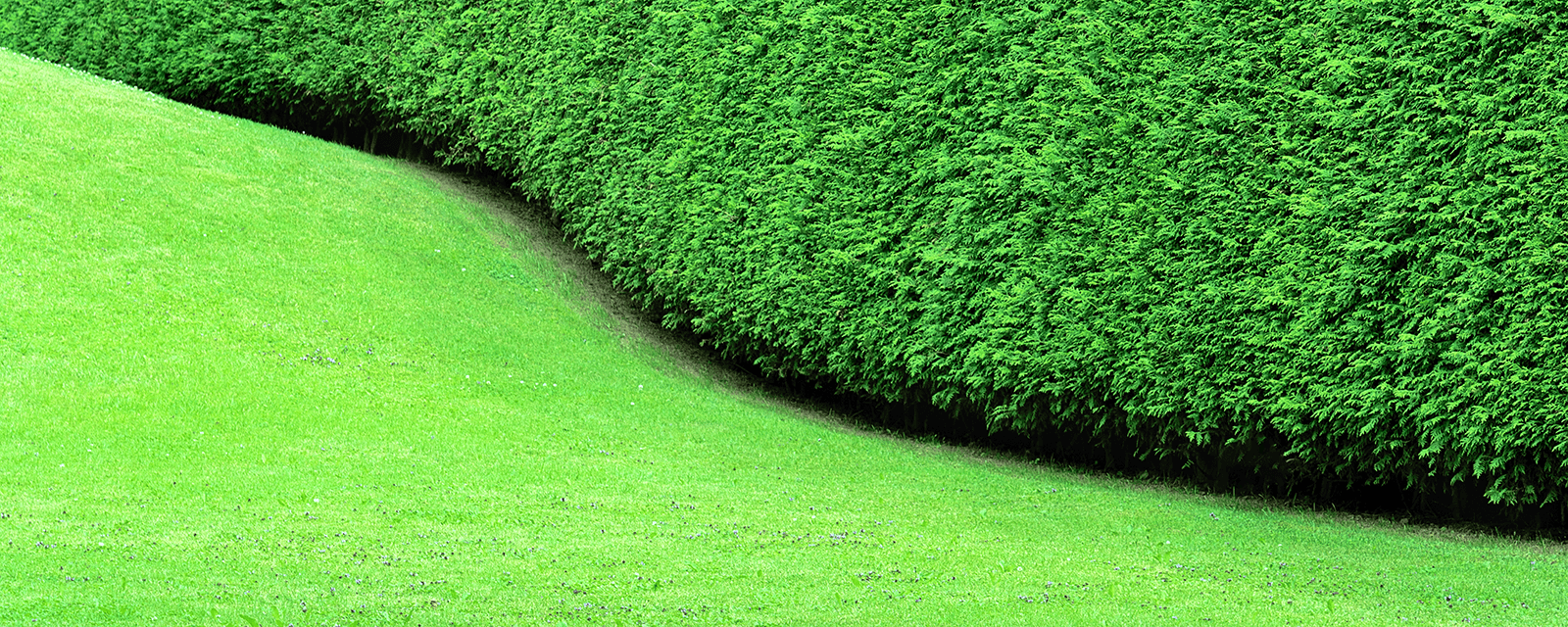 outco lawn pitch grass care