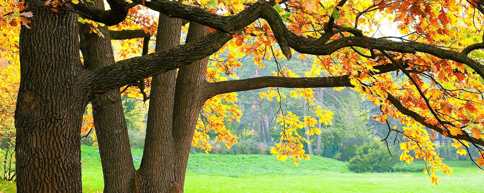 outco tree services
